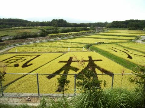 「八ヶ岳サービスエリア」の田んぼに描かれた「風林火山」の文字