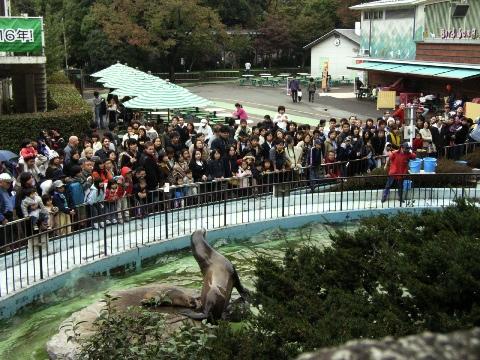 上野動物園のアシカ