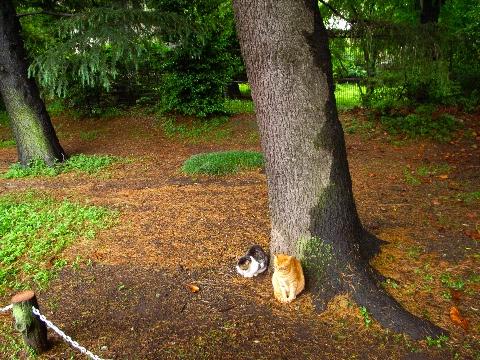 善福寺公園の野良猫