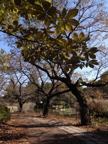秋の善福寺公園