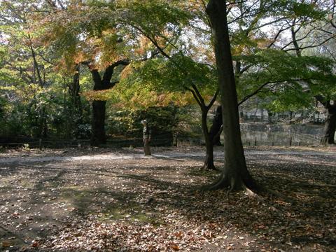 善福寺公園(東京都杉並区)のもみじに散歩中足を止める人