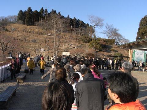 長瀞の宝登山(ほどさん)