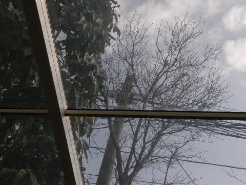見上げれば木の芽