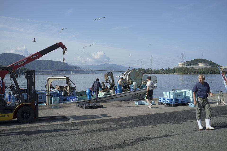 美浜原発を望む漁村での魚の水揚げ